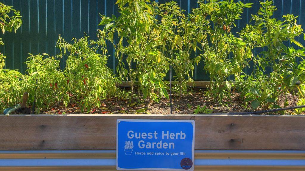 Fresh herbs to enhance your Goondiwindi camping experience