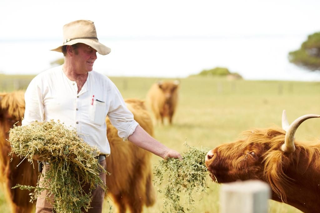 Farm hand Trevor Heywood tends lifestock at Churchill Island Heritage Farm