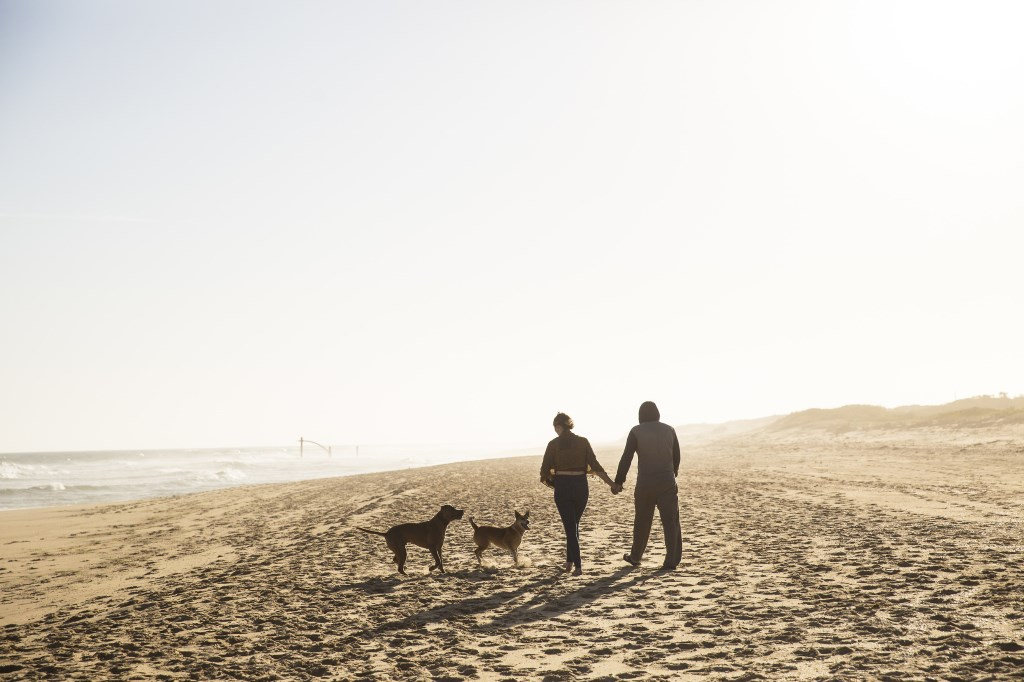Dogs permitted leash free in Lakes Entrance if East Gippsland Shire Council plans go ahead