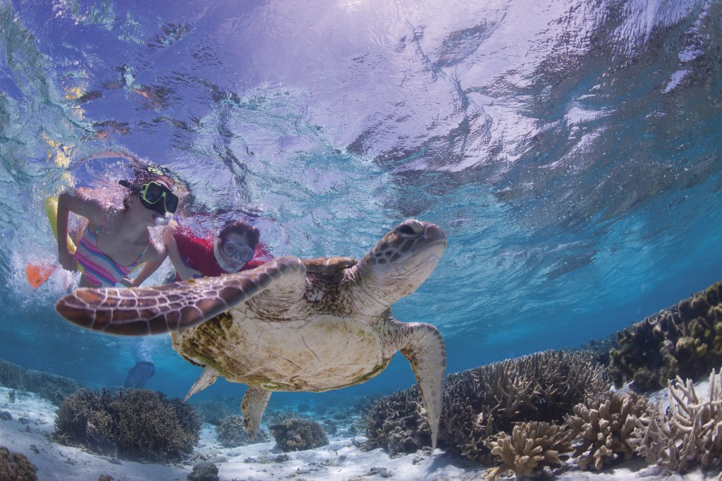 Swimming with turtles in the Southern Great Barrier Reef