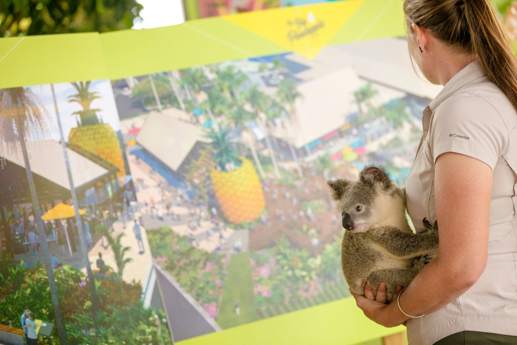 range from Wildlife HQ holds a koala while viewing Big Pineapple's renewal plans