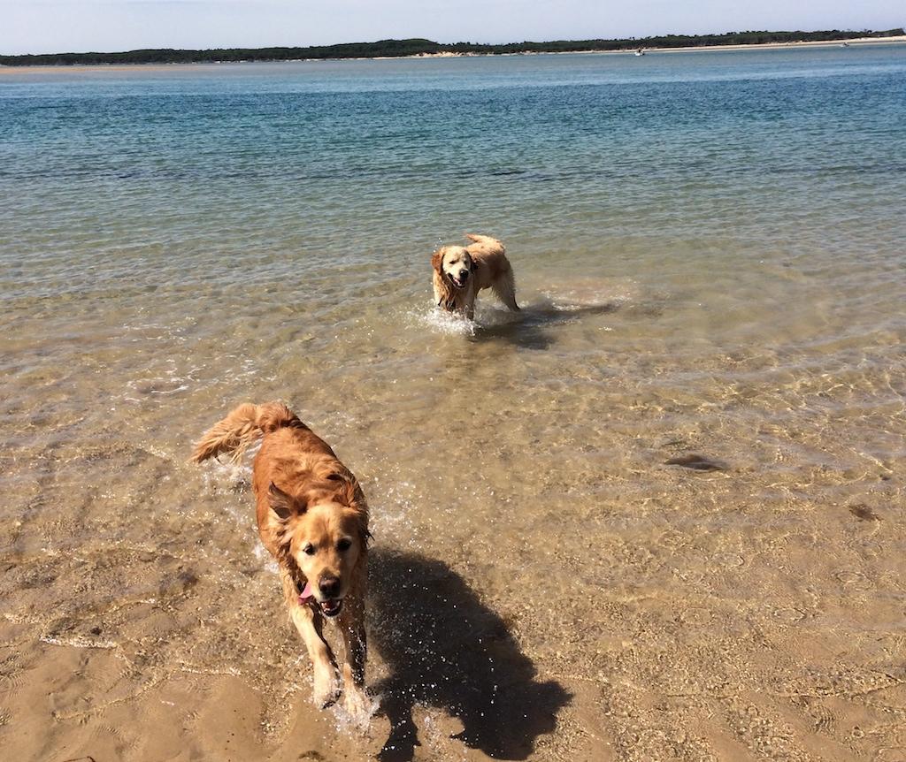 No seasonal time limits on the Bass Coast