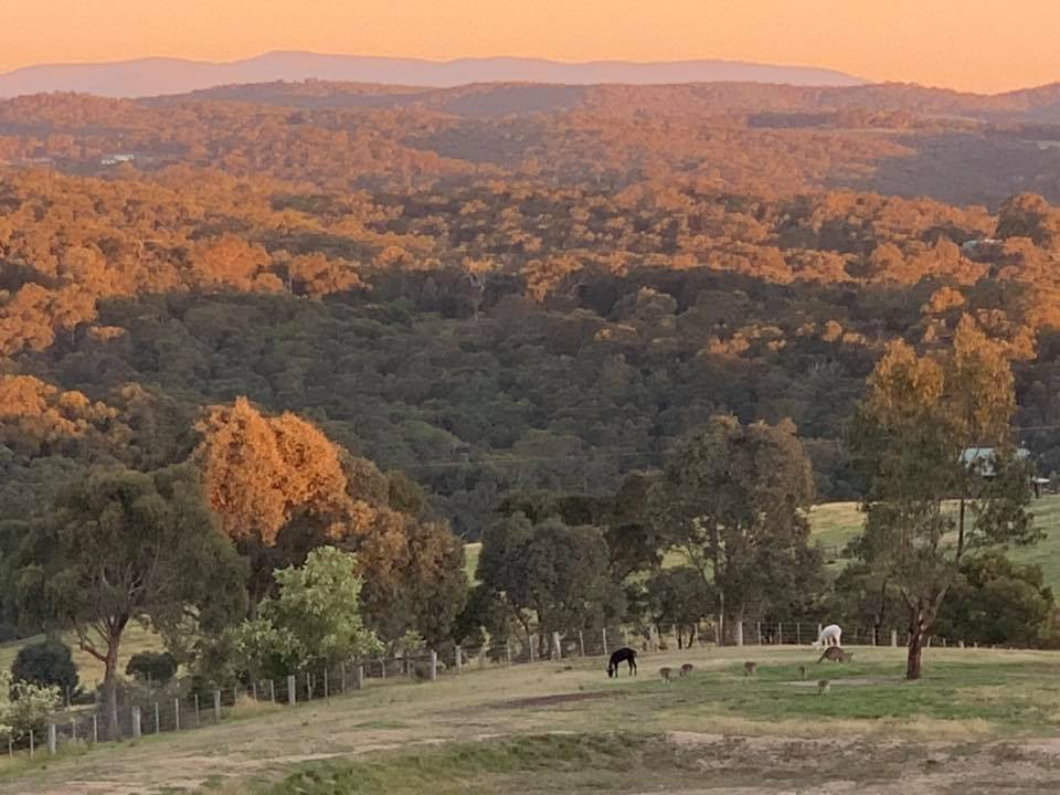 Yarra Valley views from the farm