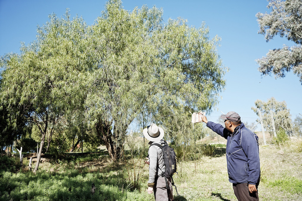 Aboriginal elder showing a visitor around the traditional Aboriginal fish traps in Brewarrina (Ngemba Country), also known as Baiame's Ngunnhu