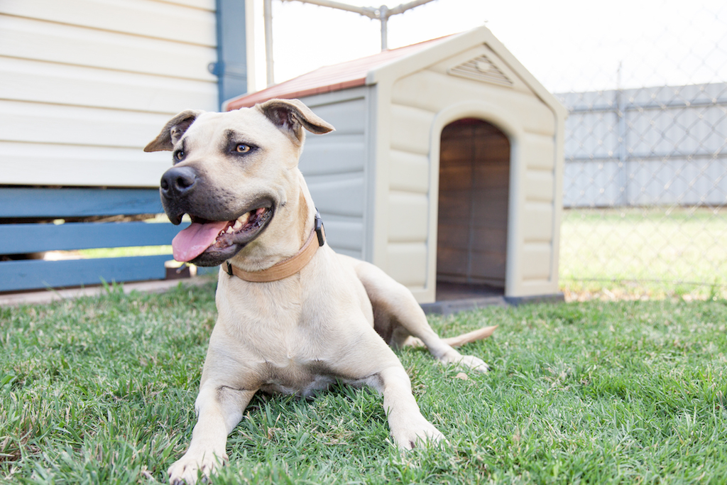 DogDog relaxing in a fenced backyard in a pet-friendly cabin at NRMA Dubbo Holiday Park