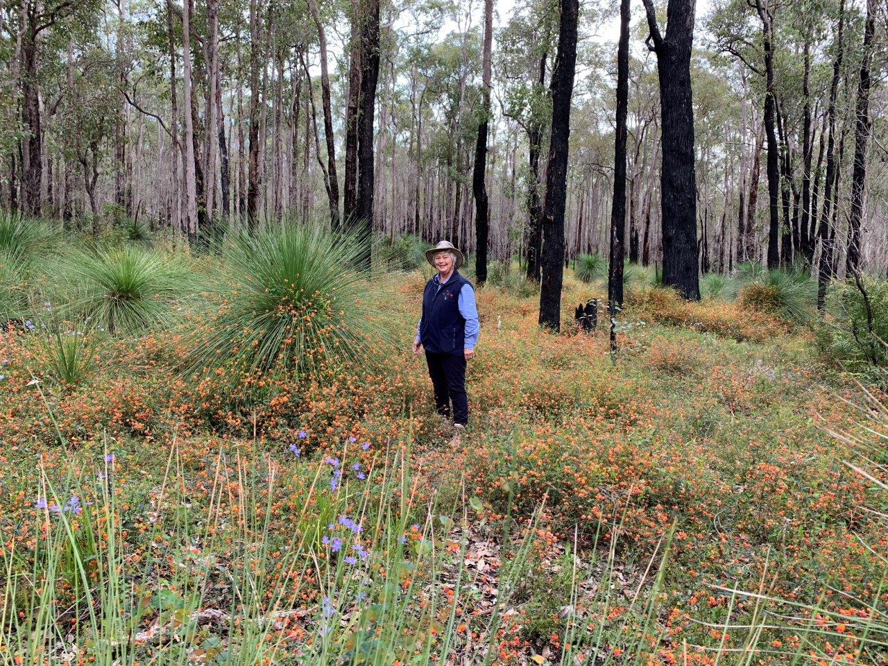 Ann Newman, author Colour Coded Field Guide of Western Australian Wildflowers