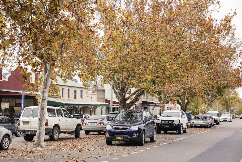 Autumn leaves dressing the country streets of Rylstone.