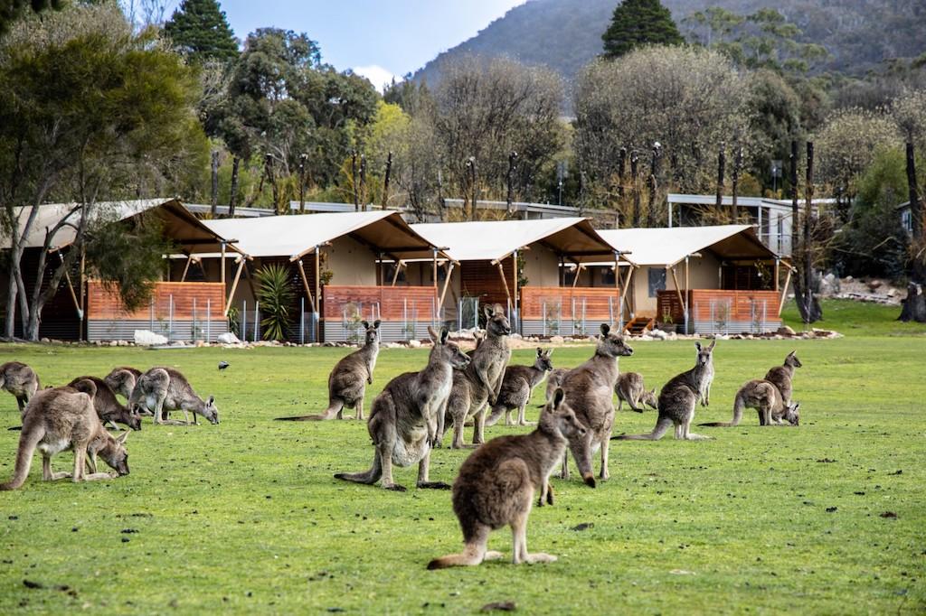 Halls Gap Lakeside Tourist Park safari tents