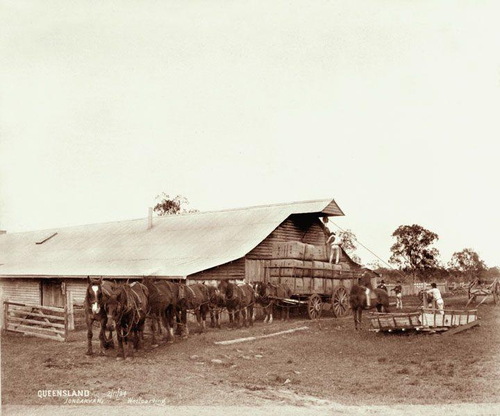 Jondaryan Woolshed 1894