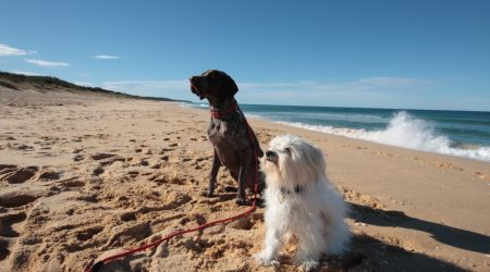 Pets Pets are permitted on certain beaches in Lakes Entrance year-round at certain times of the dayround